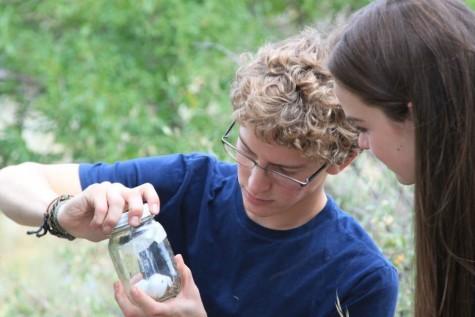 Biology Bug Project 2015