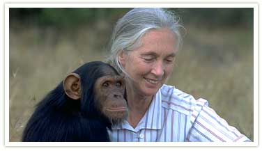 Jane Goodall bonding with a Chimpanzee in Africa
