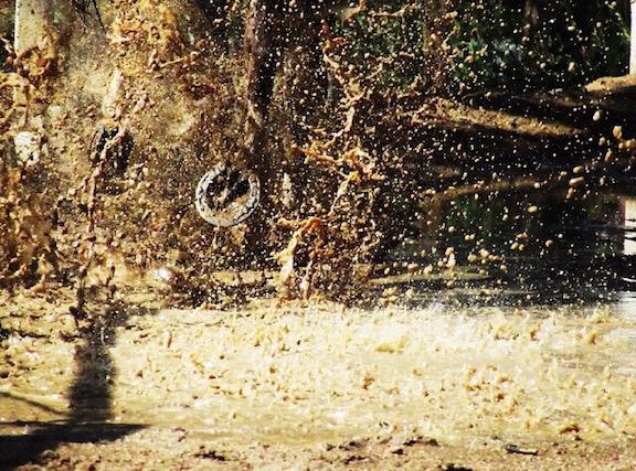 The splashing of water from a puddle is hit by sunlight, creating this golden image of an explosion of water that is featured on the Muse, taken by Aliah Char (10).