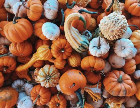 Festive Alternatives to Traditional Trick-or-Treating